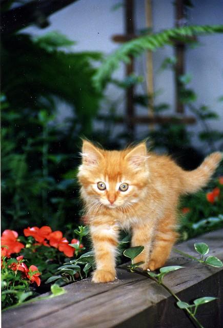 Kitten on the Move