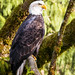 (06) Eagle Watch Photo Contest 2016 - 2017
