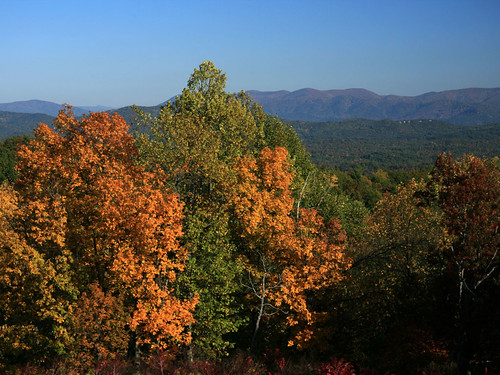 autumn yellow georgia chattahoocheenationalforest cohuttaoverlook