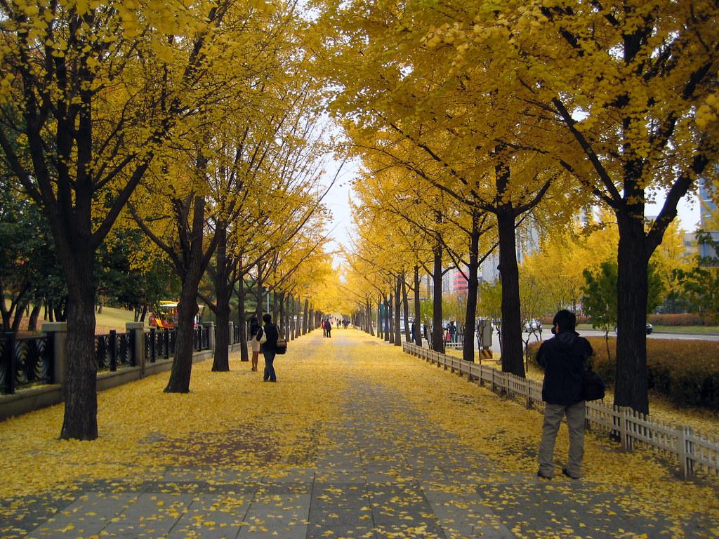 du lịch hàn quốc tự túc mùa thu