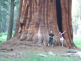 The Great Giant Sequoia and us | by LoveOurEarth