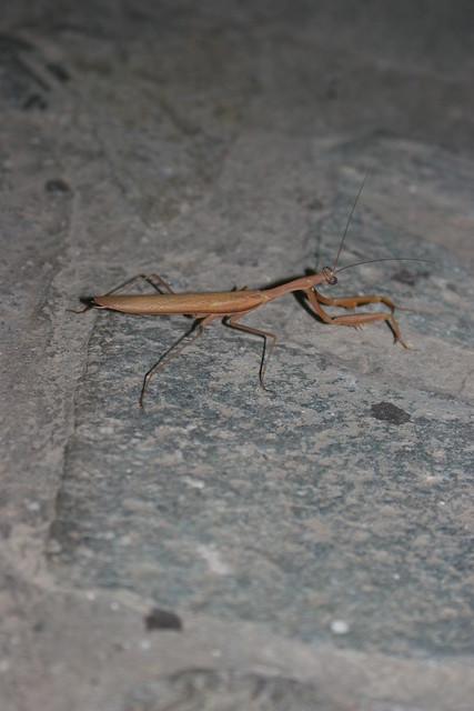 Insecte dégueu sur la terrasse de Harris II