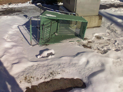 Stray Shopping Cart