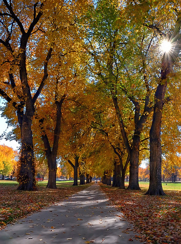 autumn fall nature landscape vanishingpoint colorado searchthebest fort path fortcollins co sunburst collins oval csu 2007 elms naturesfinest coloradostateuniversity blueribbonwinner splendiferous passionphotography mywinners abigfave goldenphotographer thegoldenmermaid