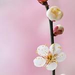 Whiteness in Spring