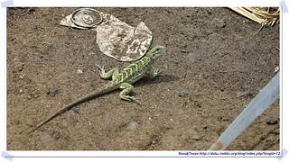 20041017_Guana@BVI_Iguana_001_A   by rosstsai
