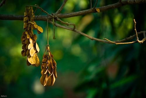 green leaves sunshine yellow bokeh 55200vr
