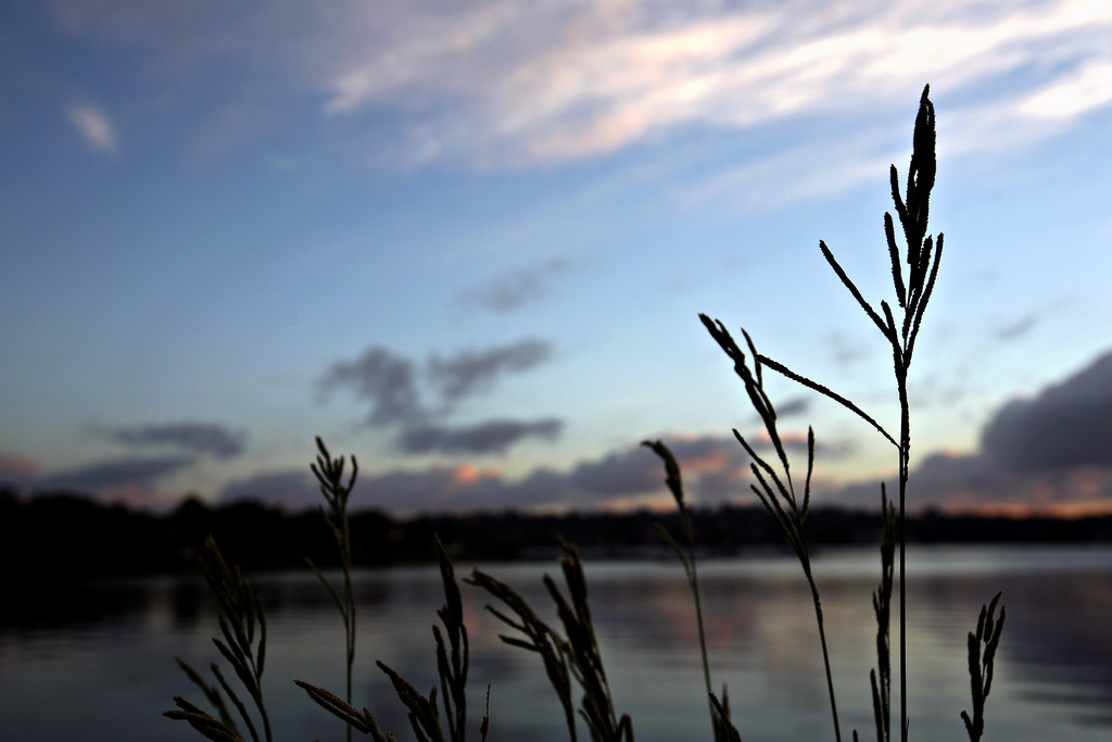 Image: Reeds in Silhouette