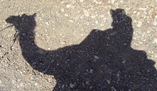 shadow of me and the camel | by Sholeh