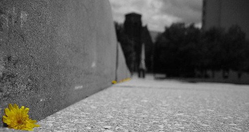 flowers bw color macro nature wall photoshop pov cityhall perspective pointofview poughkeepsie iraqwar dandelions
