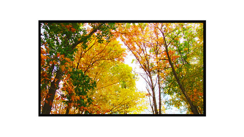 november camping trees color fall beautiful photoshop newjersey colorful edited nj ps highpoint enhanced shx shawnhikichi