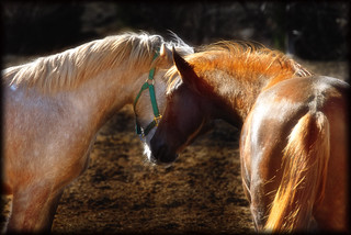Friendly Horses | by crowt59