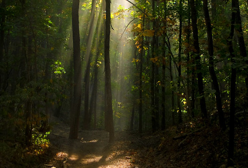 forest mark missouri twain atv ozarks