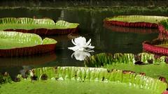 Jardin Botanique - Île Maurice