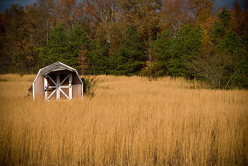 trees fall field grass barn golden amber waves country grain shed potd