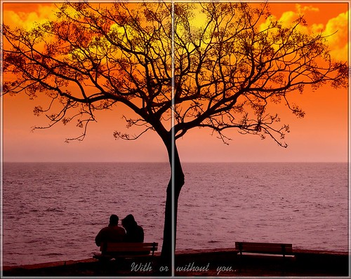 love emotion sensation sentimental soulful together lonely alone bench tree sunset u2 withorwithoutyou orange color colorful sky sea clouds photoshop cs3 fenerbahçeparkı istanbul turkey türkiye hakangil theperfectphotographer proudshopper abigfave theunforgettablepictures freephotos golddragon goldenheartaward flickrlovers cubism anawesomeshot blueribbonwinner best bestofthebest naturallyartificial 100commentgroup goldenphotographer goldstaraward bej geotagged infinestyle thechallengefactory