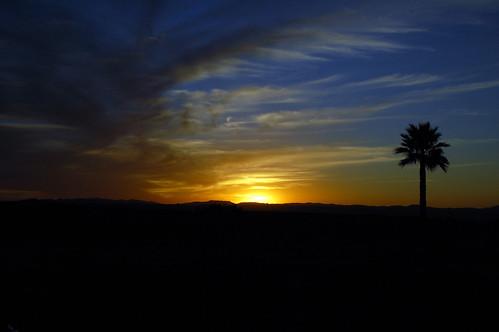 sunset sky sun silhouette clouds landscape palmtree temecula falknerwinery