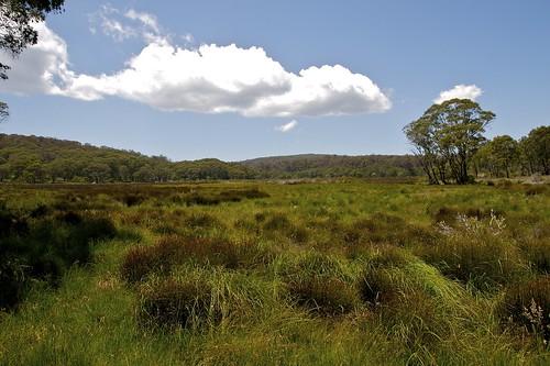 park grass nationalpark flat newengland australia alpine gloucester nsw newsouthwales np aus tundra barringtontops barrington oceania auspctagged moonan bestofaustralia moonanflat 18kmeofmoonanflat newenglandnorthwest pc2422