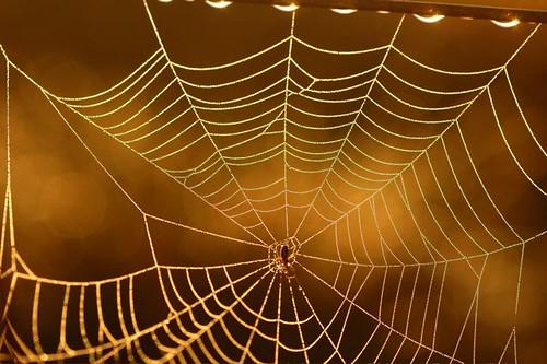 spider at dawn