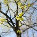 week of spring :: monday.6