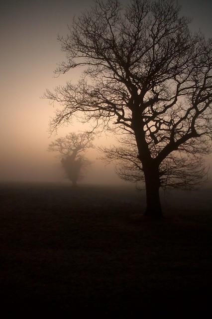 imgp4881 - Morning Mist