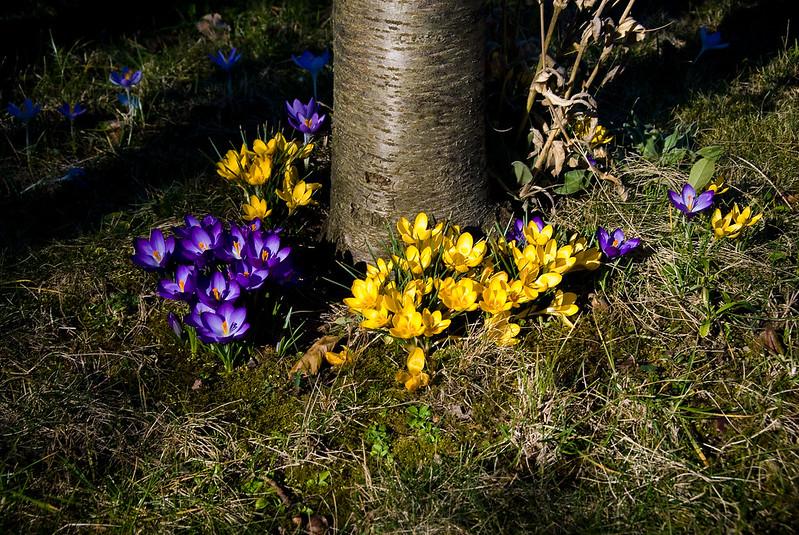 Ein Frühlingssonntag im Garten