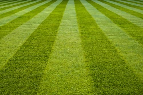 Stripes on the lawn - Emmanuel   by AdamKR