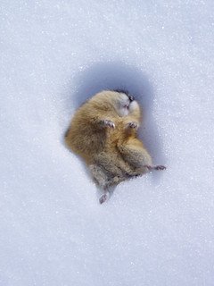 Stone Cold Lemming | by Andre Charland