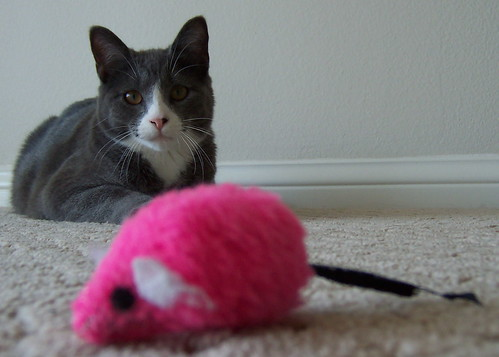 Gaius: the cat who digs hot pink | by Michael Ingrassia
