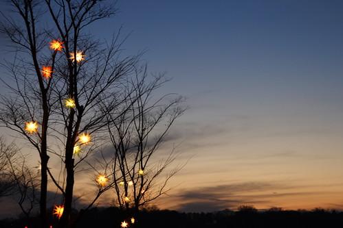 christmas sunset sky cloud tree japan geotagged branch illumination chiba 日本 千葉県 sodegaura 千葉 イルミネーション mrhayata 東京ドイツ村 袖ヶ浦市 geo:lat=354039622 geo:lon=1400593814