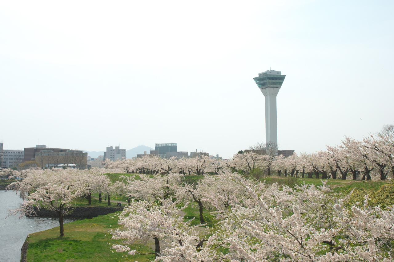 Cherry of Goryokaku / 五稜郭の桜