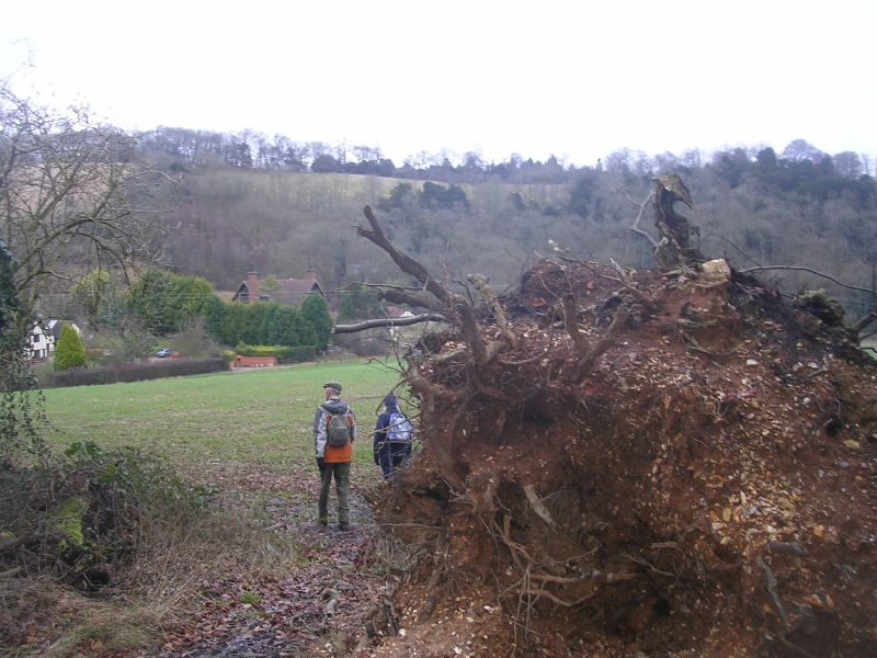 Past a fallen tree Goring Circular