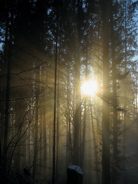 XXXX Reise durch die Schweiz : Nebel / Fog im Wald beim Bantiger bei Bern in der Schweiz
