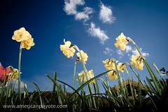 Flowers II | by American Peyote
