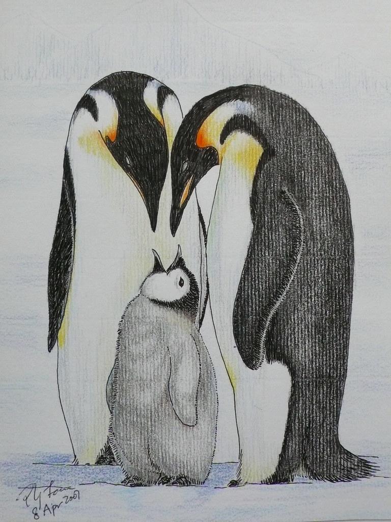 Emperor penguin color pencil drawing 1 poyee lam0321 flickr