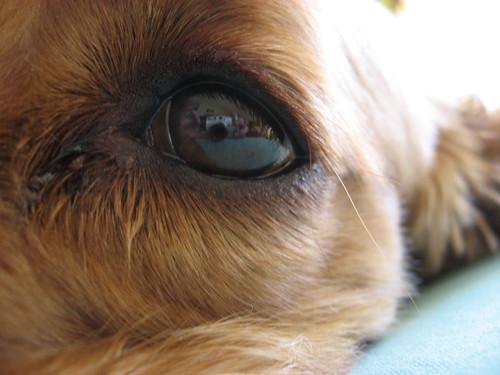A través de un ojo animal