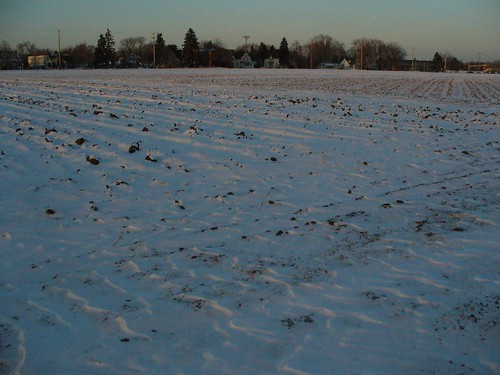 Testing fields after an early march snow