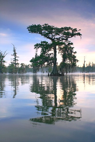 morning blue sky mist lake reflection tree water fog canon dawn la moss louisiana lafayette ben south spanish swamp pierce cypress preserve lakemartin cypressisland breauxbridge
