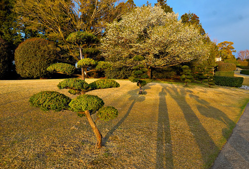 trees sunrise shadows cherryblossom 1224mmf4g