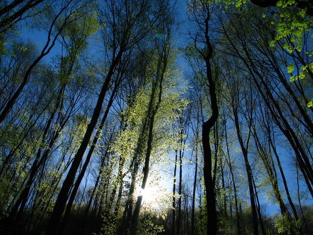 Forest (eng) / Erdő (hun)