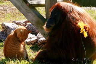 Ape&cat