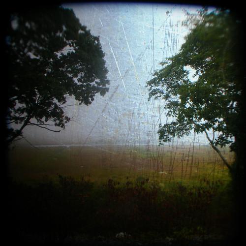 texture nature fog polaroid connecticut foggy grasses marsh saltmarsh stonington wildliferefuge ttv throughtheviewfinder hourofthediamondlight barnislandmarsh barnisland barnislandwildliferefuge courtnayjaniak