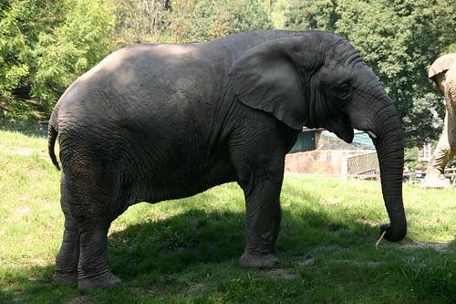 Elefant   by freeskier