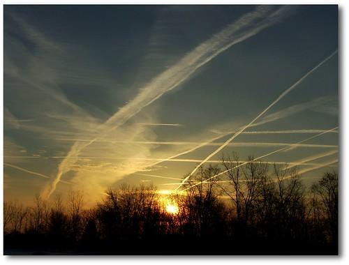 morning trees sky sun sunrise dawn treeline contrails daybreak
