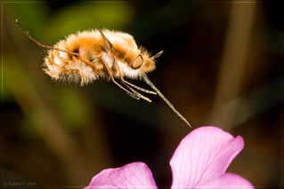 """On air"" macrophotography 