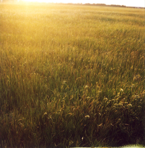 sun film field grass polaroid shine meadow 600 sonomacounty slr680 roidweek2008 panpola