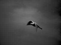 Peace | by kavehfa