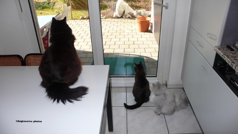 3 Cats waiting to go out