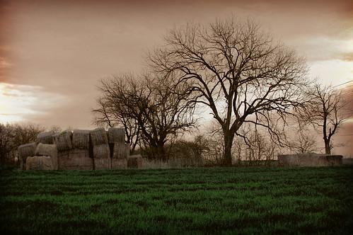 tree haystack biblicalreference toilunderthesun