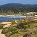 Pebble Beach and 17 Mile Drive